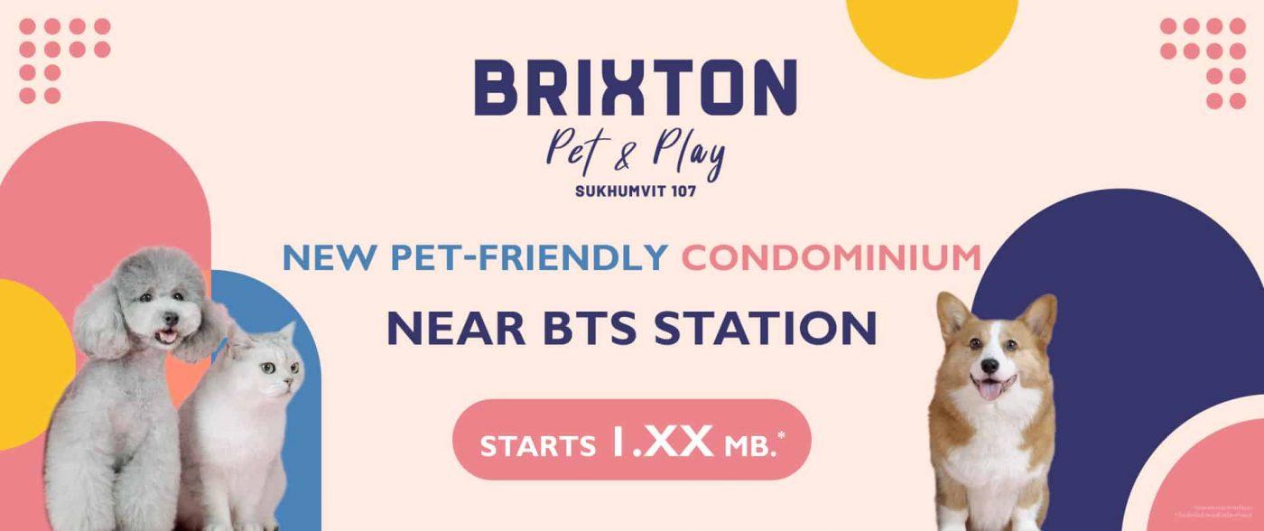 brixton-pet-and-play-sukhumvit-107